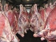 Мясо, конина, говядина оптом от производителя